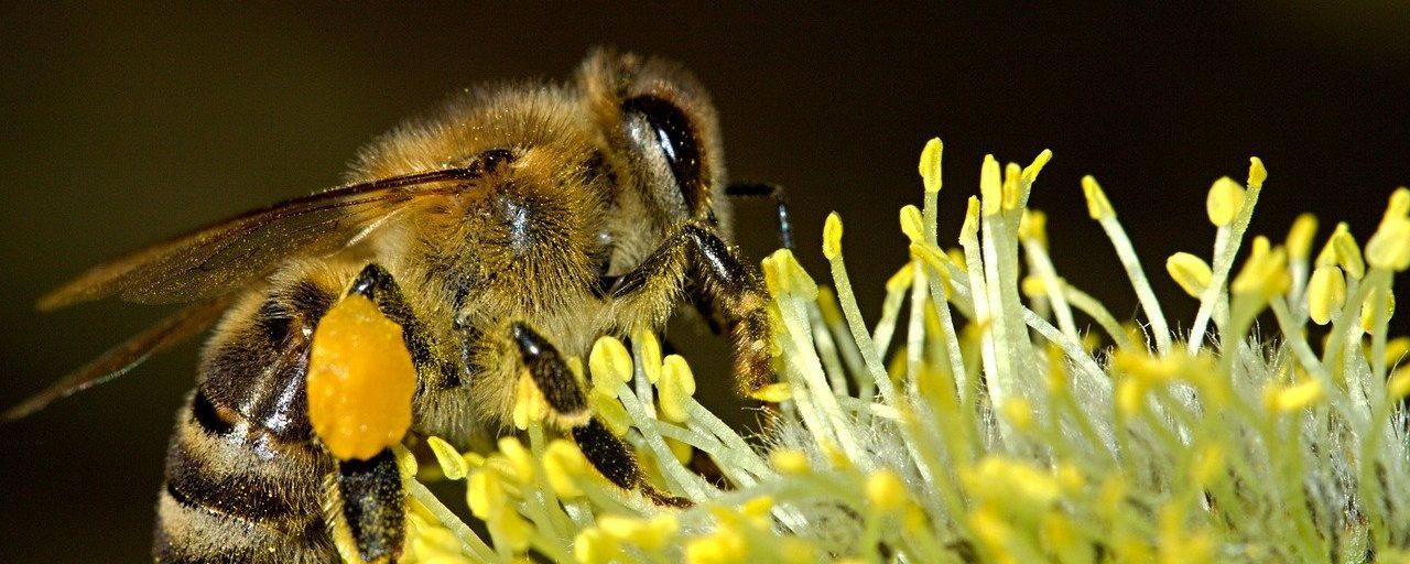 Communicating the Value of Biodiversity